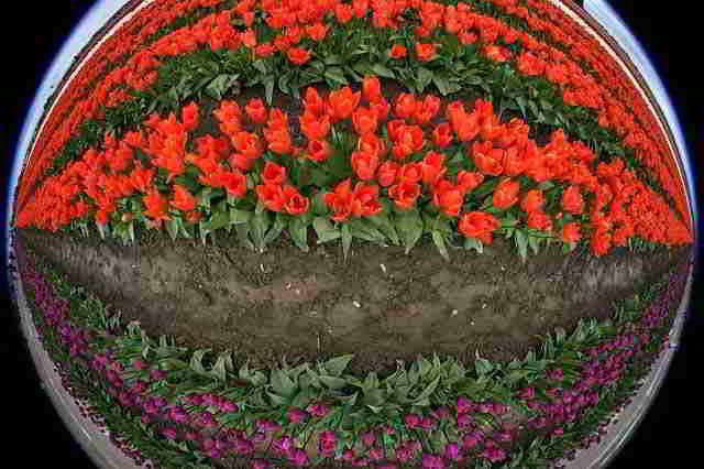 gryadka-cvetov
