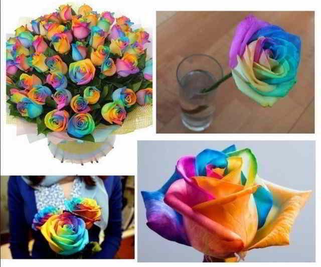 rozy-krasyat