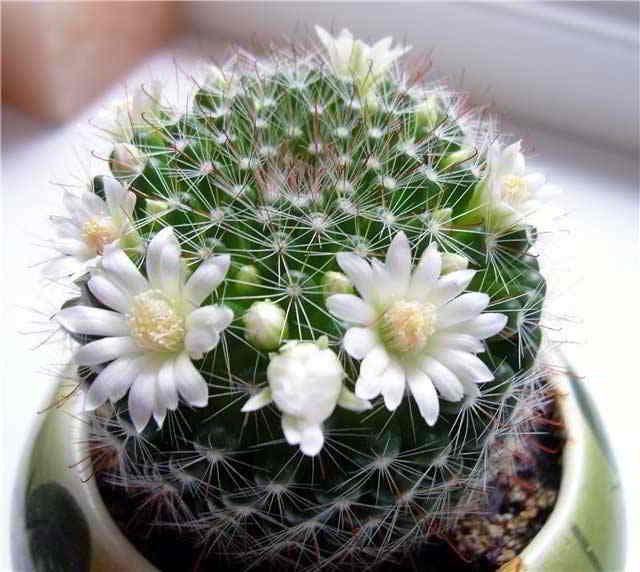 kaktus-dlya-vracha