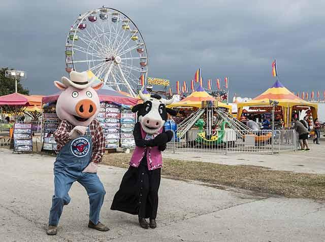 костюм свиньи
