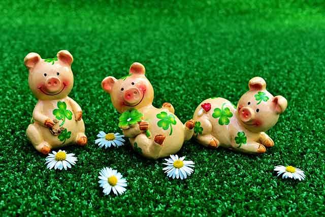 счастливые свинки