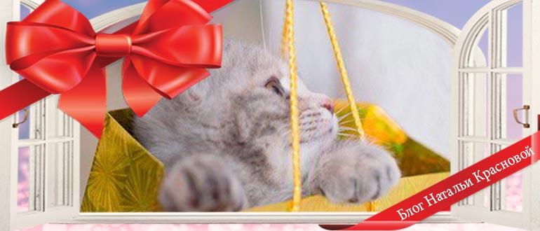 Как оригинально подарить котенка