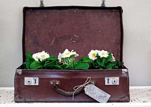 горшок из старого чемодана