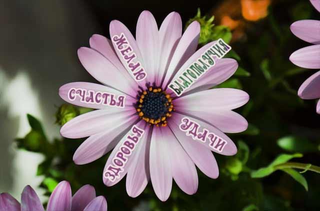 цветок с пожеланиями