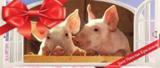 в чем встречать 2019 год свиньи