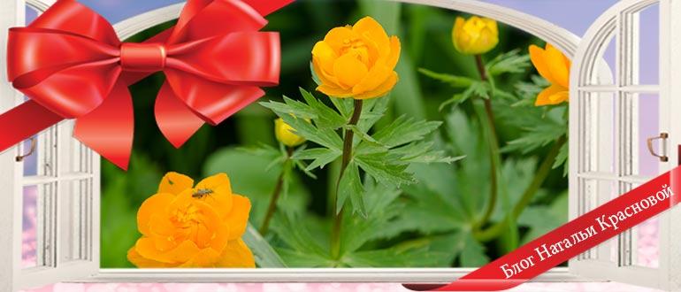 Изображение - Шуточное поздравление на день рождения с вручением прикольных подарков shutochnye-pozdravleniya-s-vrucheniem-prikolnyh-podarkov