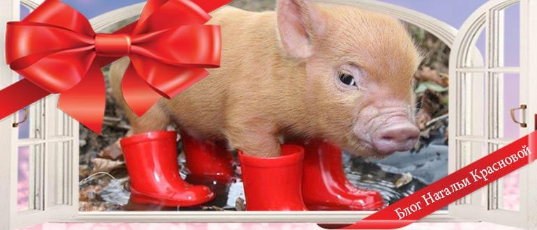 35 прикольных фото свиньи - символа 2019