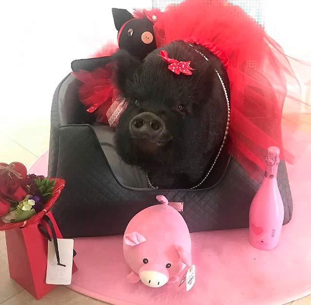 свинья в кресле