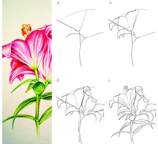 рисунок цветка на конкурс