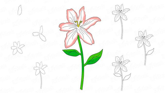 как нарисовать цветок пошагово