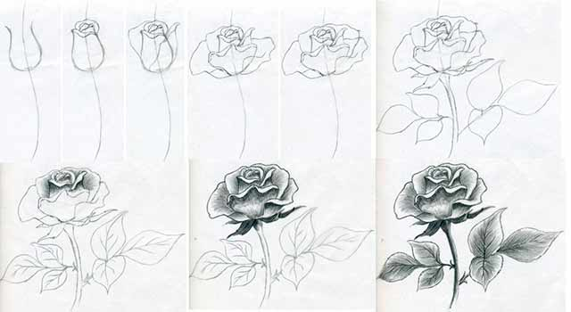 красивый рисунок розы