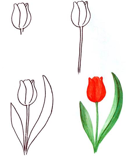тюльпан пошагово