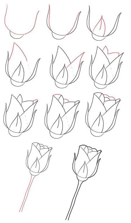 тюльпаны карандашом