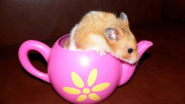 мышка в чайнике