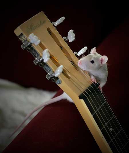 мышка гитаристка