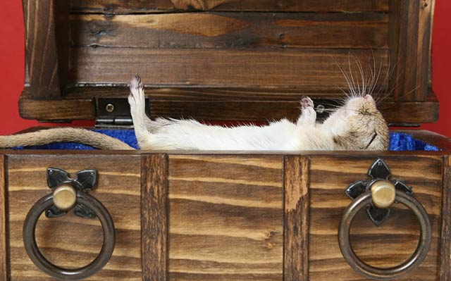 мышка спит