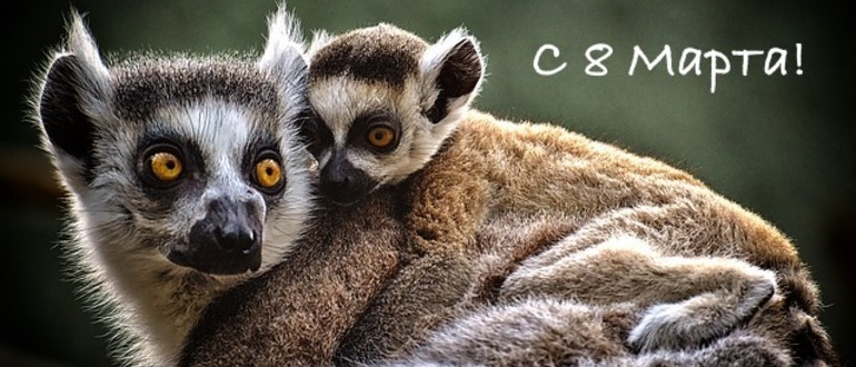 коала и детеныш