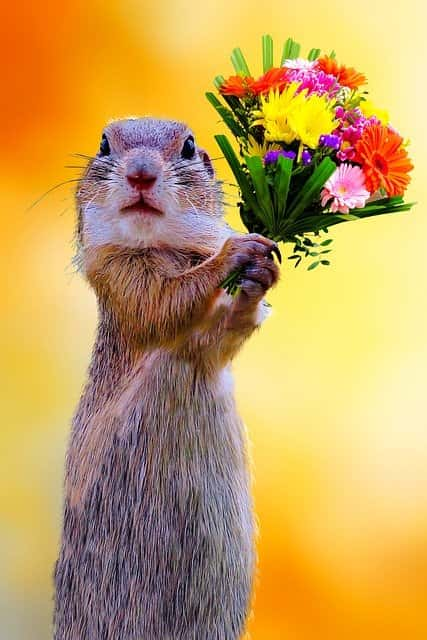 суслик с цветами