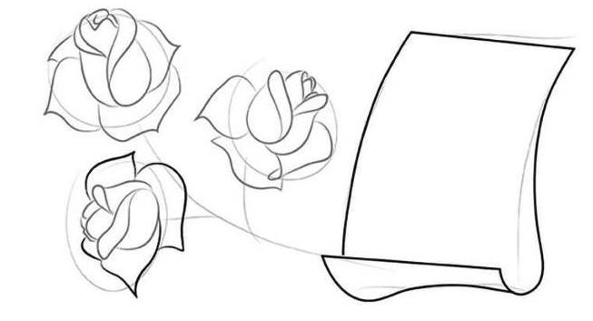 2 этап розы в карандашем