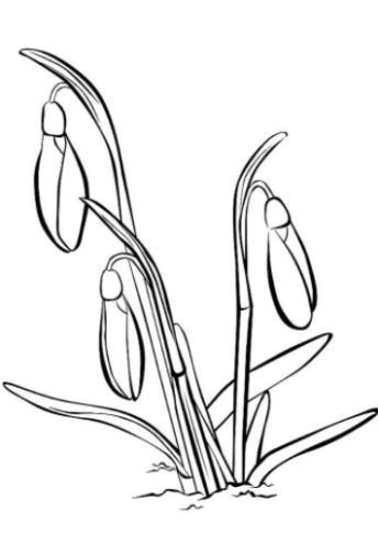 нежное растение