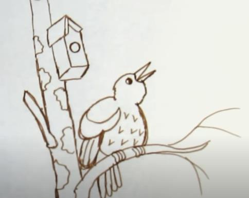 птичка на ветке карандашем
