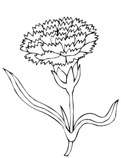 чб растение