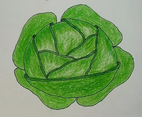 рисунок капусты для детей