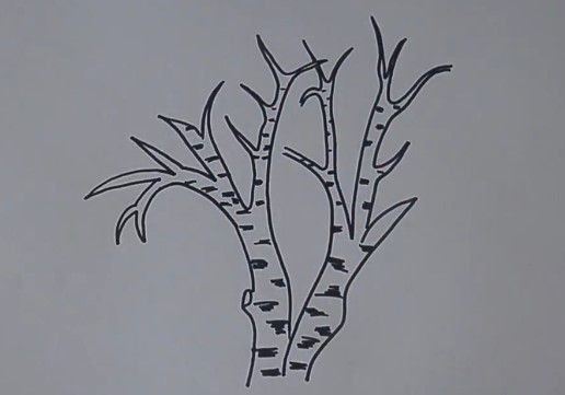 два ствола березы без листьев