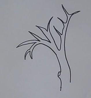 эскиз ветвей