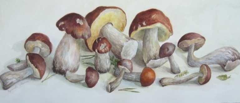 рисунок грибов карандашами