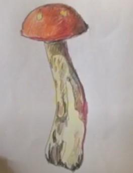 подберезовик рисунок