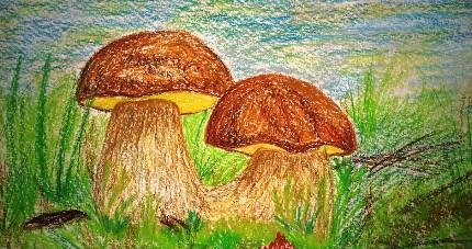 грибы в лесу карандашом
